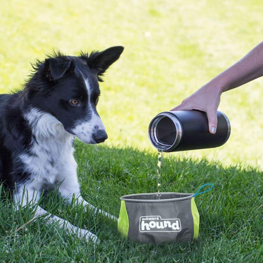 Outward Hound Port-A-Bowl Collapsible Travel Dog Food and Water Bowl.jpg